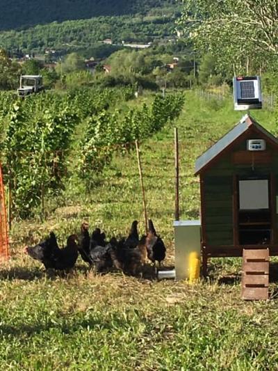 Il progetto Corilus entra nel vivo: primo pollaio mobile in campo